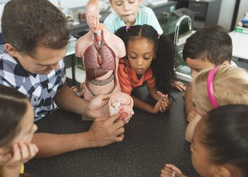 Overhead view of a teacher showing to his school kids a brain part of a dummy skeleton wile they are looking at it in classroom at school
