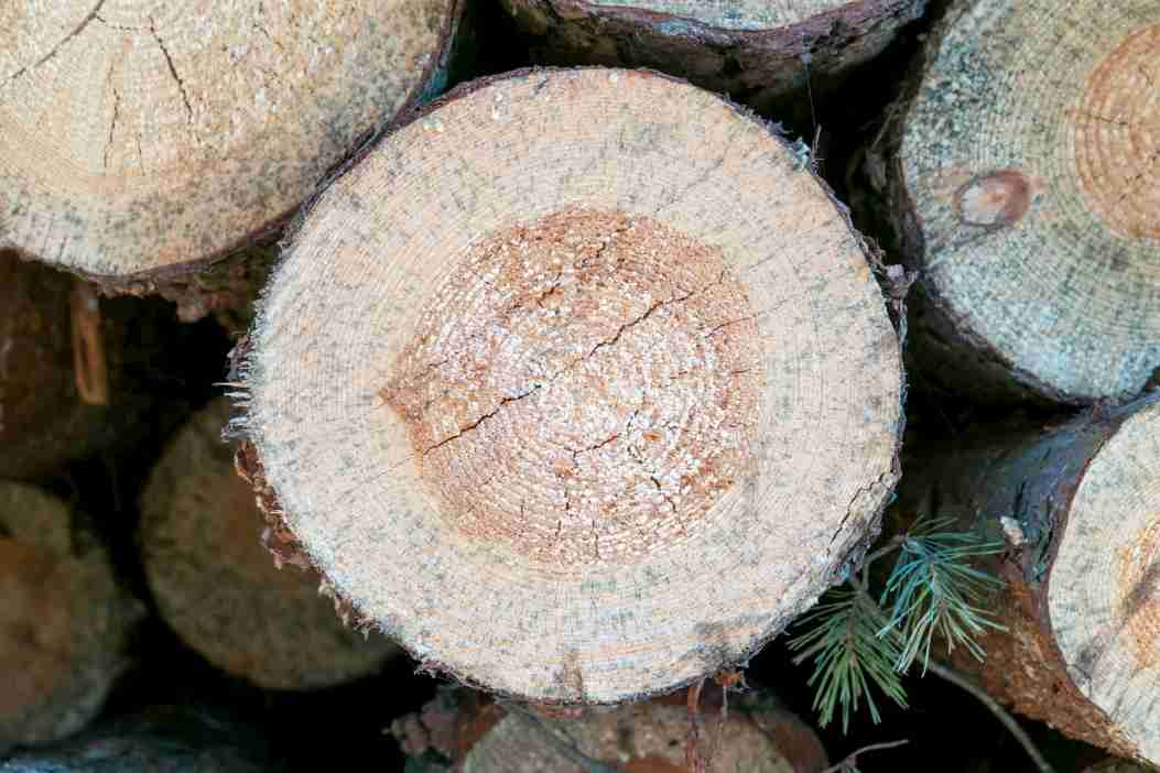 Wooden logs for making turning blanks